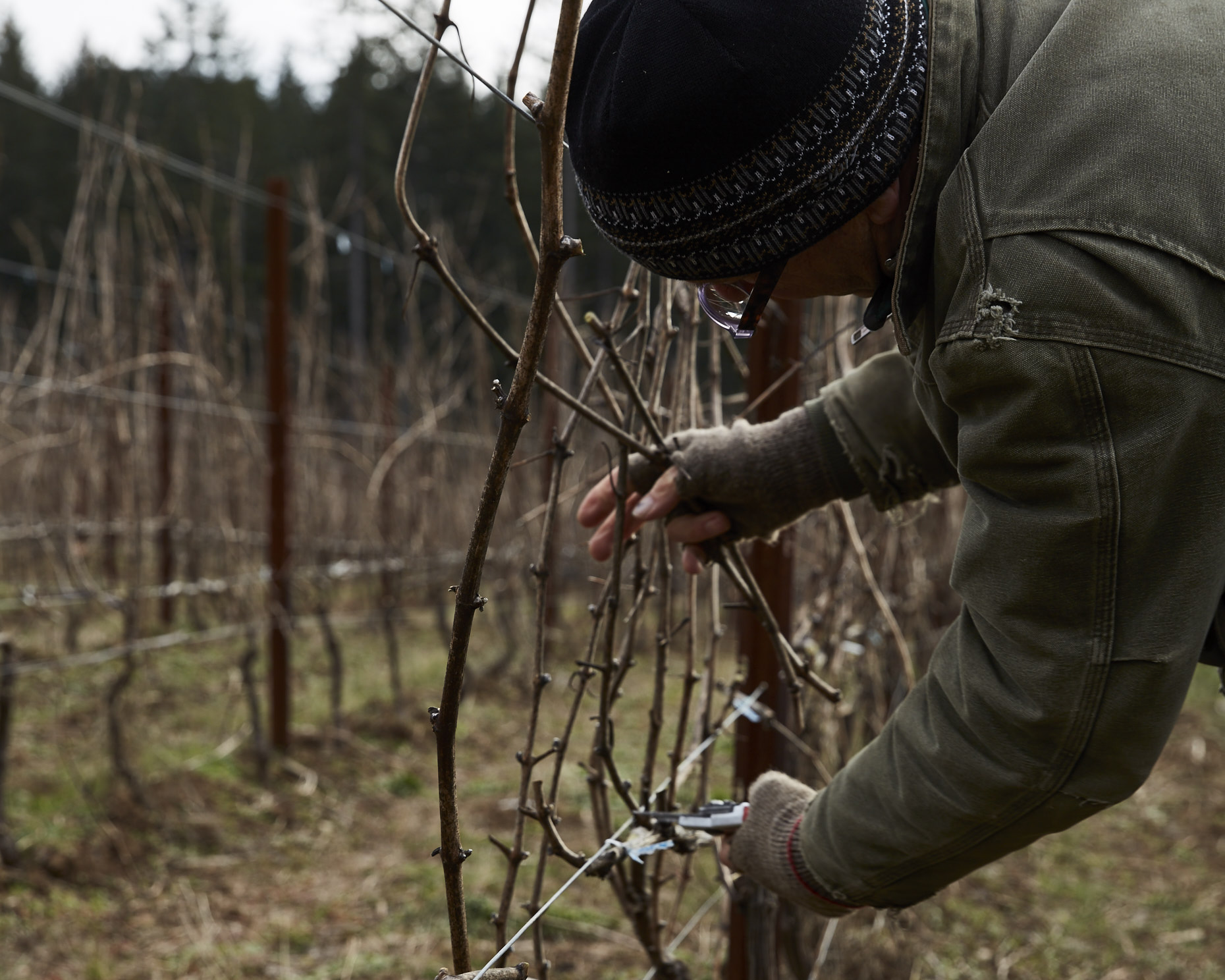170104_JF_BF_PRUNING_023