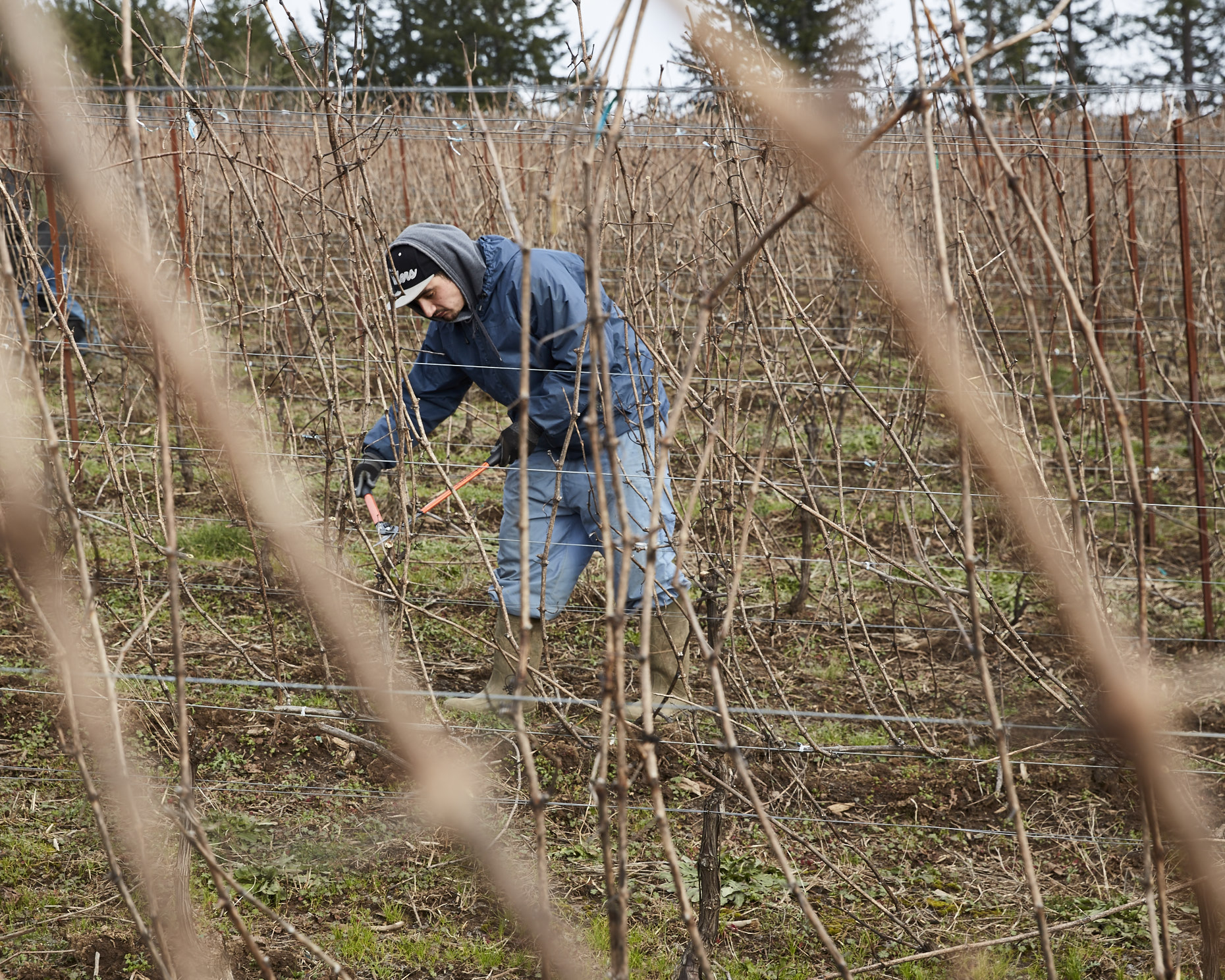 170104_JF_BF_PRUNING_032