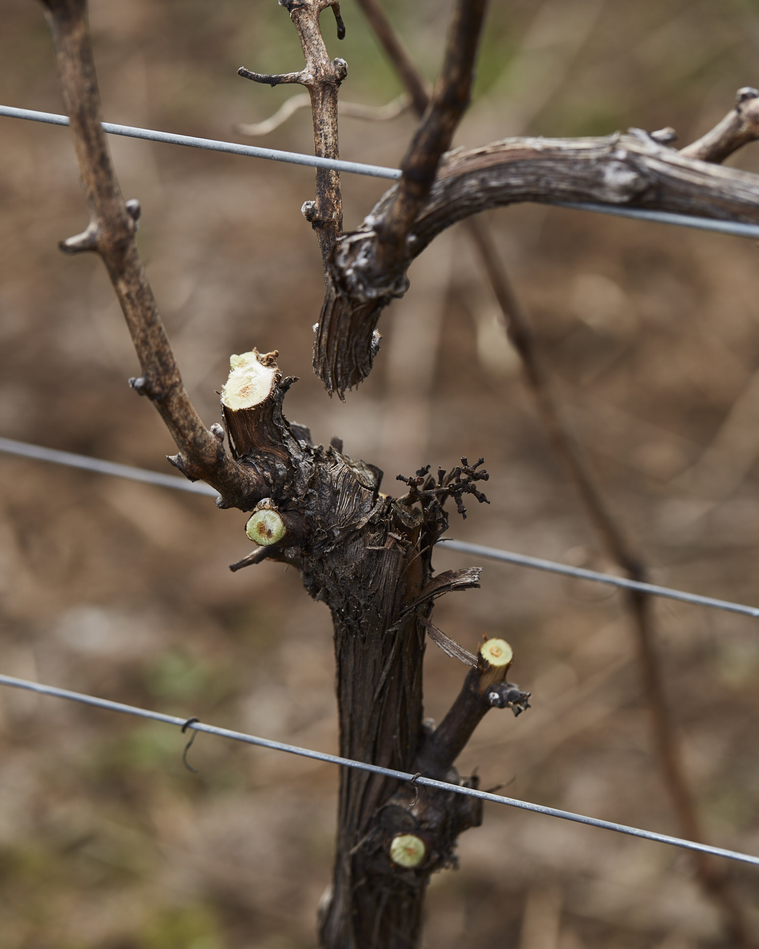 170104_JF_BF_PRUNING_121
